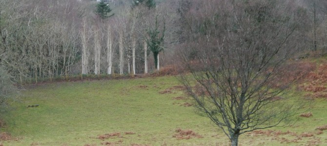 Uncommon Ground: Land Art in Britain 1966-1979